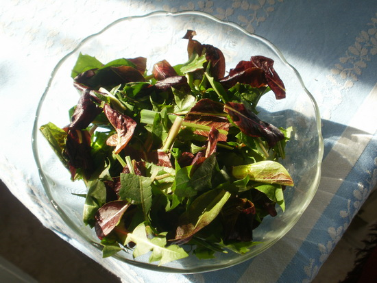 salata od maslacka